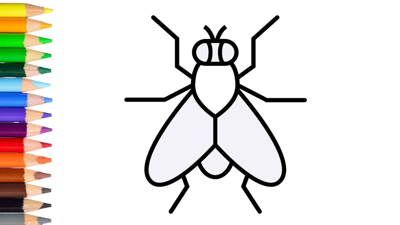 How to draw a fly easy learn drawing step by step with draw easy - YouTubeYouTube