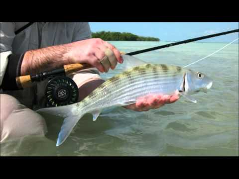Fly Fishing Bonefish, Permit, Snook & Co. Saltwater Flats Mexico