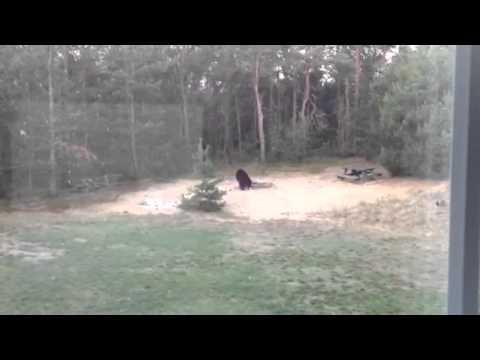 Black Bear spotted in Ottawa County yard