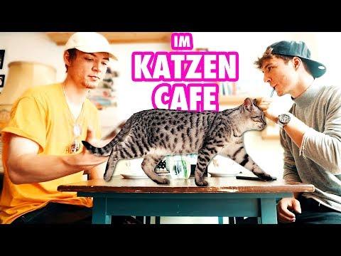 Im Katzen Café