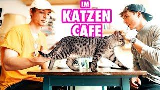 Im Katzen Café | Die Lochis