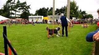 Newbury Show 2013 Dog Agility Relay