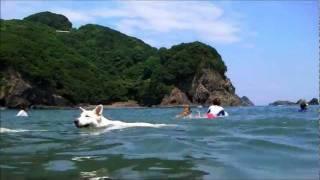 ここは徳島県美波町にある犬も泊まれる宿泊施設 美波阿波サンラインモビ...