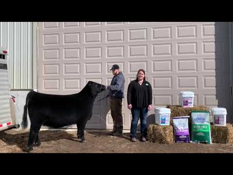 Cattle High Octane Supplements - Feed Their Potential
