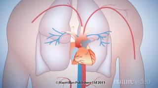 The 50-year quest to replace warfarin: by Nature Video