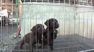 子犬が生まれていますよ http://www.woof.jp/ecs.html.