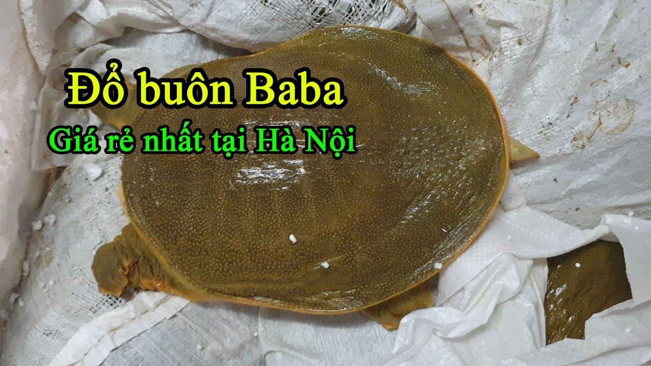 Bán baba ngon nhất & giá ba ba, thịt ba ba rẻ nhất tại Hà Nội | Cá Hoàng Đế