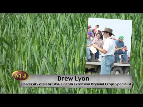 Nebraska Wheat Conditions - Market Journal - March 30, 2012
