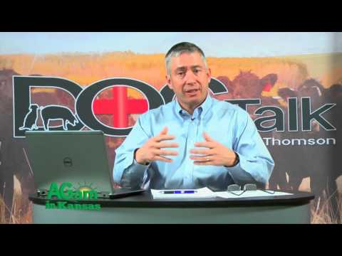 DocTalk - What Causes Bloat in Cattle - January 4, 2016