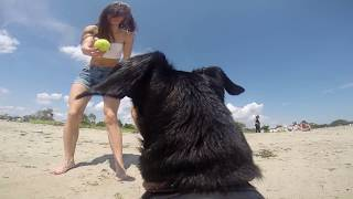 Puppy's first time at the beach | GoPro Dog
