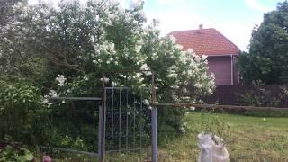 #Подмосковье #Клин Троицкое дом продаю видео участка #АэНБИ #недвижимость