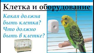 Какая должна быть клетка у птицы. Что должно быть в клетке.