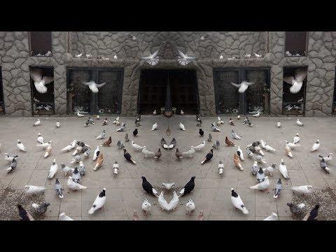 СТЕПАН КУЮМДЖЯН ПРЕЗИДЕНТ ФЕДЕРАЦИИ ГОЛУБИВОДОВ АРМЕНИИ ОБРАЩАЕТСЯ к  Голубиводов Азербайджана