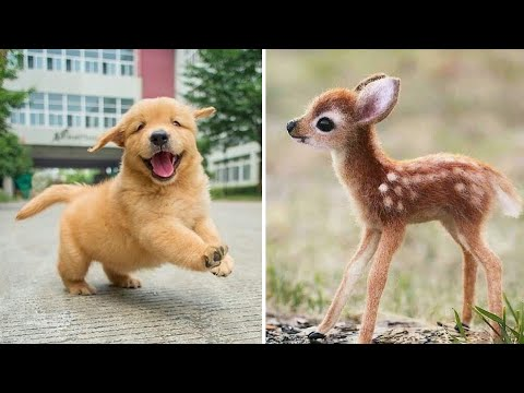 Baby Animals 🔴 Funny Cats and Dogs Videos Compilation (2020) Perros y Gatos Recopilación #10