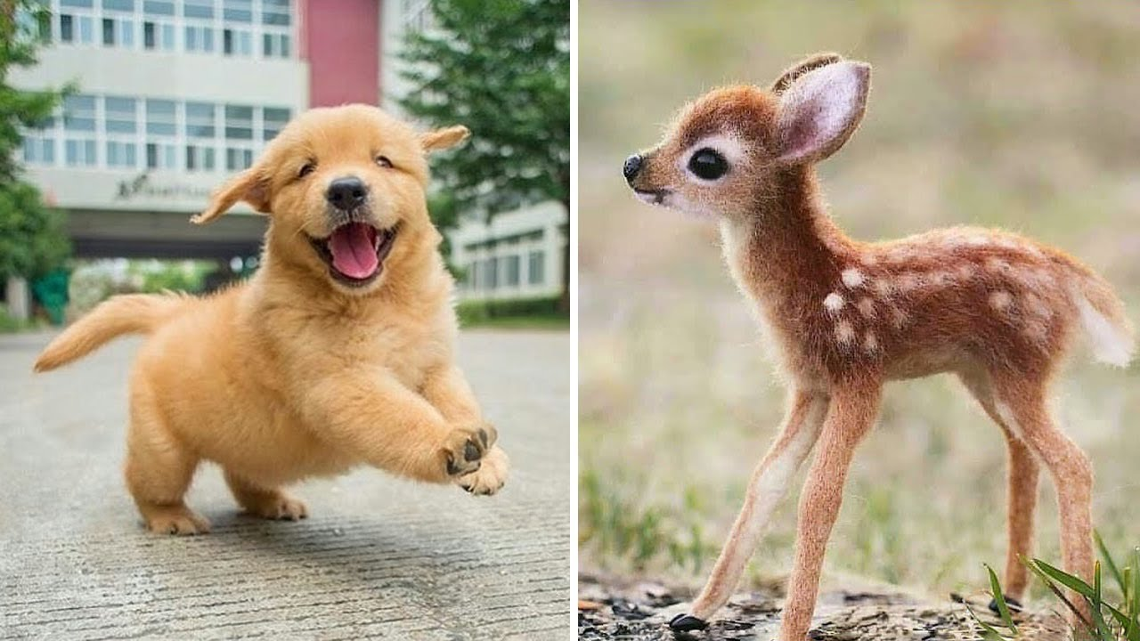 Funny cats and dogs videos by Golden Retriever