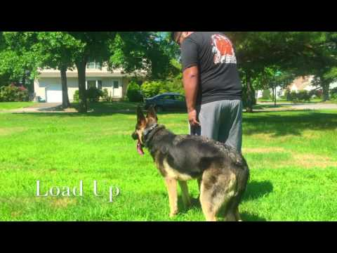 Anya: German Shepard with Amazing Obedience: Best Dog Trainers in New York