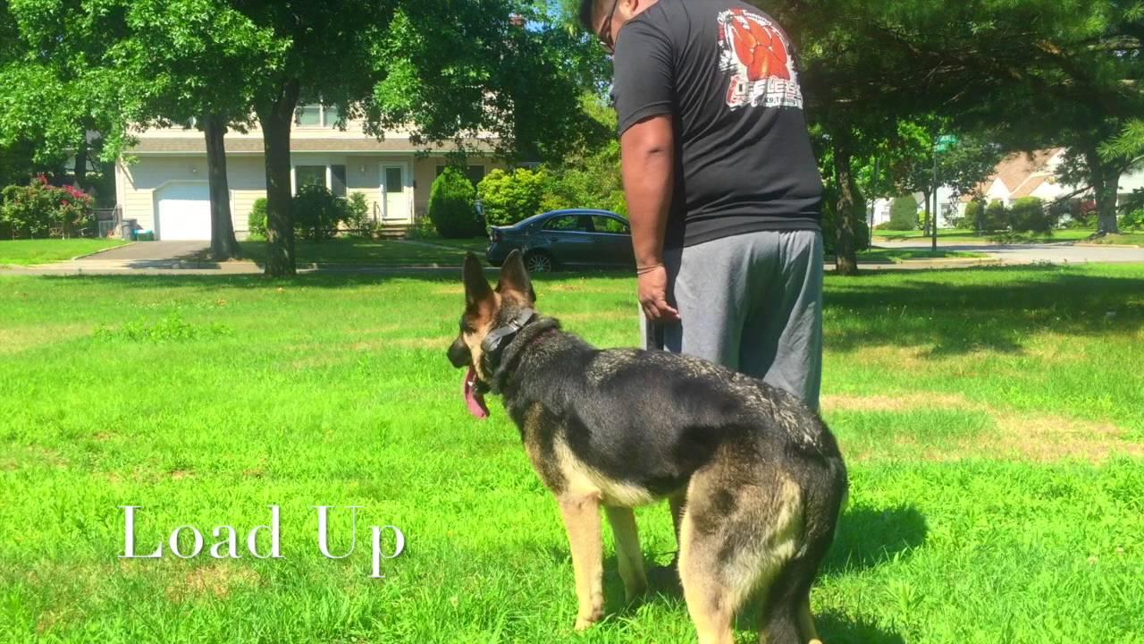 Dog Trainers On Long Island New York