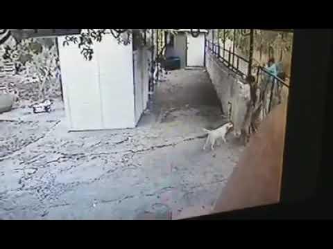 Κλοπή σκυλιού στην Μόρια από ¨επενδυτές¨.. - YouTube