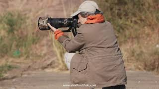 4k Mini Wildlife Moments: Angela Shooting in Ranthambore '20