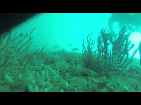 Diving the Indra