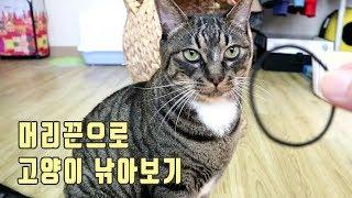 머리끈 던지는 척 했을때 고양이의 반응