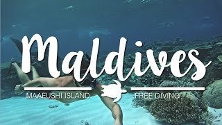 Free Diving in the Maldives | Low cost Paradise in Maafushi Island
