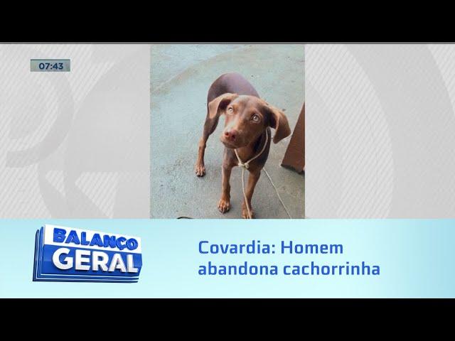 Covardia: Homem abandona cachorrinha e o animal corre atrás da moto depois de ter sido largado