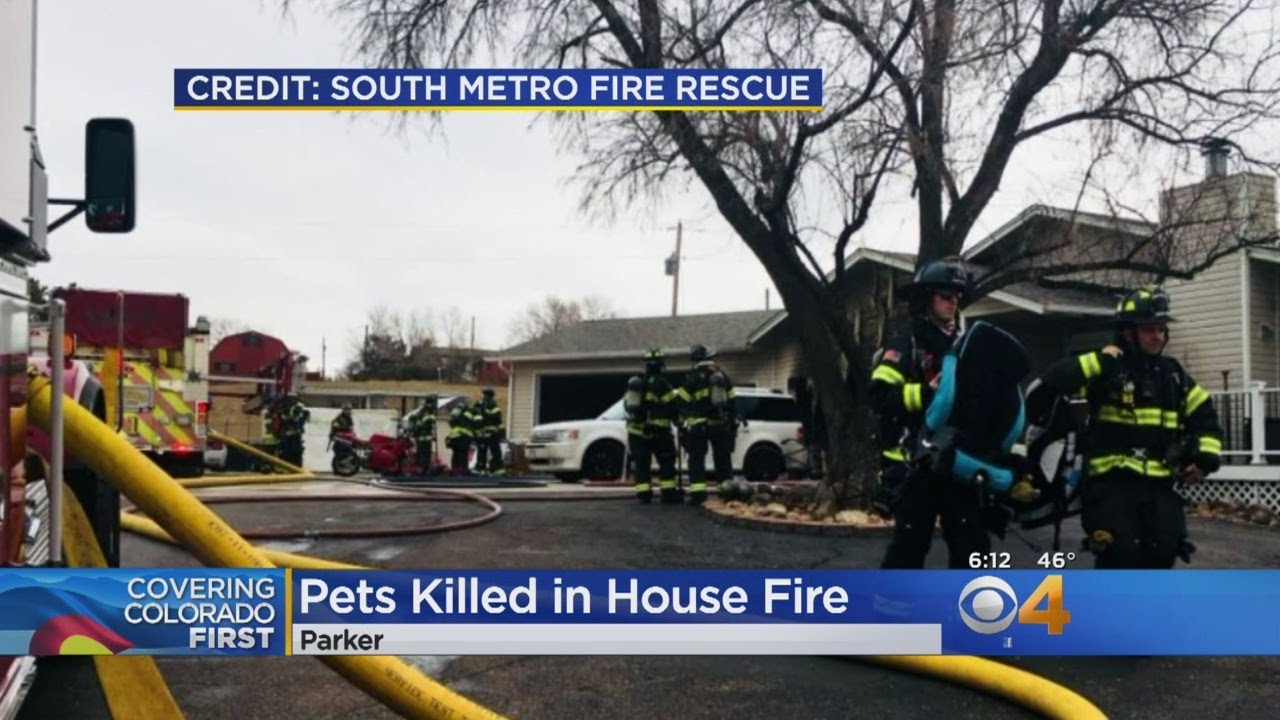 Family Dog & Snake Die In House Fire