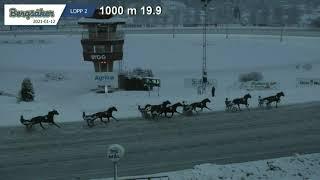 Vidéo de la course PMU PRIX LOPP 2
