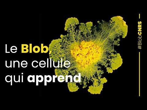 Le blob, la cellule qui apprend