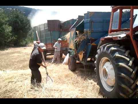 Turkey wheat farming Türkiye Tarla patoz manzaraları