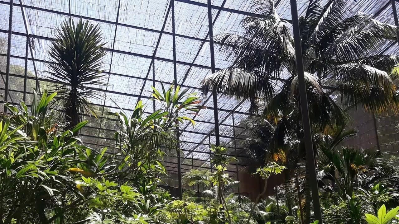 Ботанический сад Лиссабона — Википедия | 720x1280