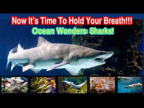 What to see at New York Aquarium 2019