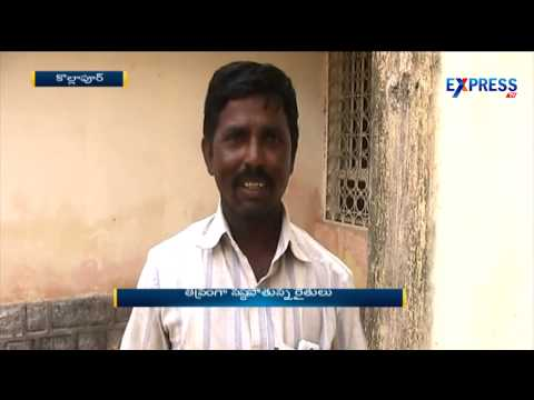 Kollapur Mango Farmers Have No Profit This Summer | Express TV