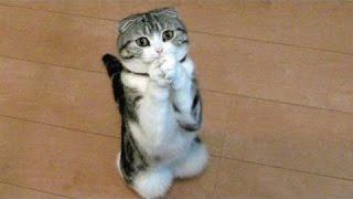 Śmieszne Koty I Psy Prosząc O Jedzenie - Słodkie Zwierząt