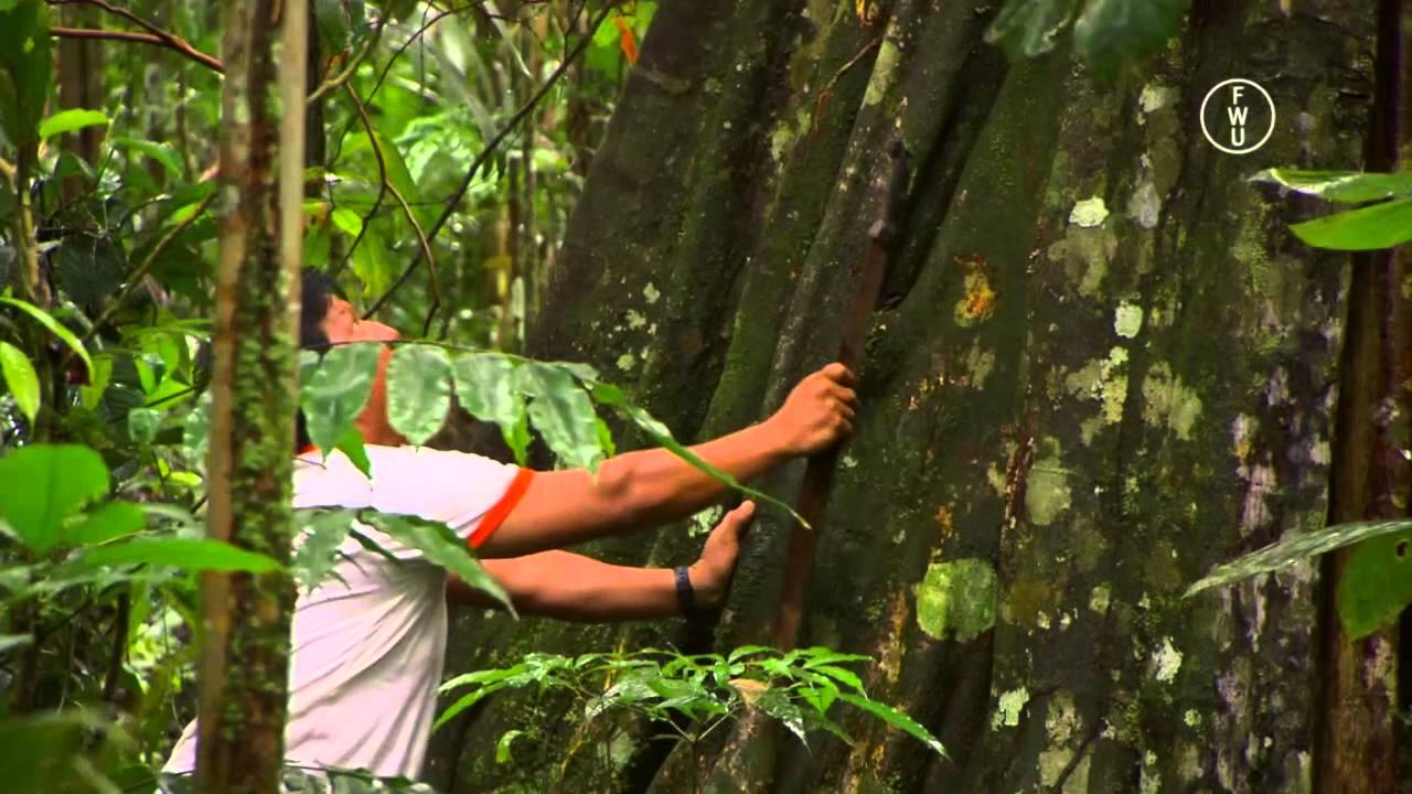 FWU - Amazonien: Ökosystem tropischer Regenwald - Trailer - YouTube