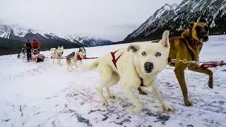 Dog Sledding Adventure!