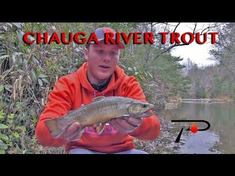 Chauga River Trout Fishing
