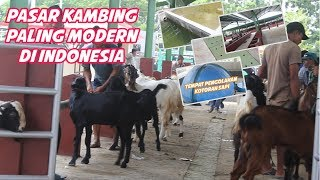 Download Video pasar Kambing PALING MODERN di Indonesia MP3 3GP MP4