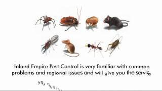 termite control Pomona, 213-928-7849, bed bug removal pomona, mice removal, roach removal, walnut