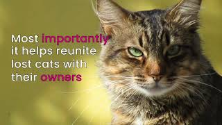The Importance of Microchipping Cats