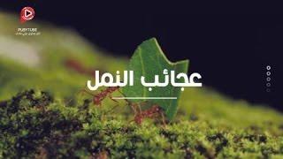 غرائب وعجائب النمل - حقائق مذهلة.