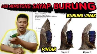 Cara membuat burung jinak dan tidak kabur...\/ how to clip Parrot wings