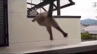Кошка слишком смелая
