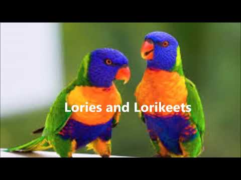 In Depth Guide of Species of Parrots. What Species of Bird is Right for You?