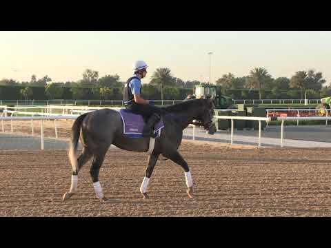 Dubai World Cup 2019: Meydan Horse Training On March 5, 2019