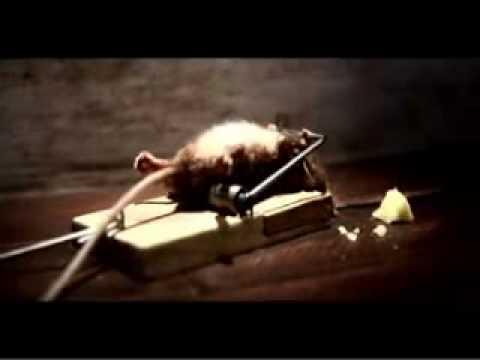 Mighty Mouse - WORLDS STRONGEST MOUSE!