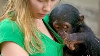 Приколы с обезьянами