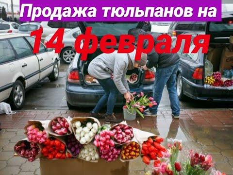 Сколько можно заработать на продаже цветов на 14 февраля и 8-ое марта? Бизнес на тюльпанах с машины