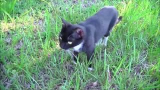 硫黄島の猫3 Iwo Jima Cat3